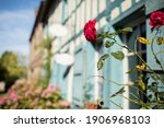 Gerberoy And Red Roses. Old...