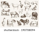 agriculture,animal,background,bovine,cartoon,cattle,chicken,collection,cow,design,domestic,doodle,element,ewe,farm