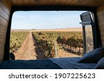 Vineyard View From Inside A Sel ...