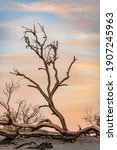 Dead Tree And Sand Dunes On A...