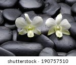 White Orchid On Wet Pebbles