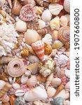 Tropical Seashells And Corals...