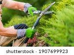Small photo of Caucasian Gardener in His 40s Trimming Plants Using Professional Commercial Grade Garden Scissors. Spring Time Backyard Garden Plants Maintenance.