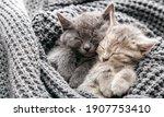 Couple Cute Kittens In Love...