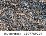 Background Of Mussel Shells....