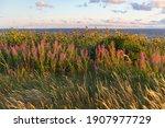 Sandy Beach  Grass  Bushes And...