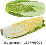 chinese cabbage set. chinese... | Shutterstock .eps vector #1907989006