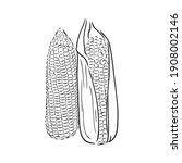 corn  maize or zea mays ... | Shutterstock .eps vector #1908002146
