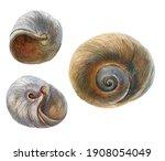 Seashell On A White Background...