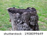 Gray And Black Tree Trunk