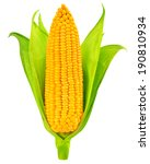 single an ear of corn isolated. ... | Shutterstock . vector #190810934