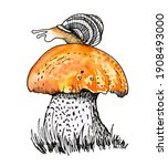 Large Noble Boletus Mushroom In ...