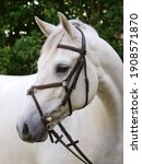 A Headshot Of A Grey Horse In A ...