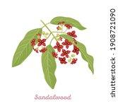 sandalwood branch with flowers...   Shutterstock .eps vector #1908721090
