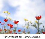 red wildflowers in the graden. | Shutterstock . vector #190880066