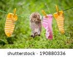 Stock photo pet kitten 190880336
