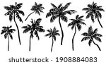 tropical palm trees sketch set. ... | Shutterstock .eps vector #1908884083