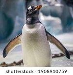 A Photo Of A Gentoo Penguin ...