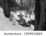 black and white winter view of... | Shutterstock . vector #1909013869