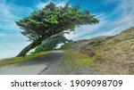 Beautiful Landscape  Cypress...