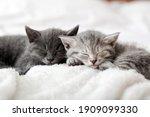 Kitten family in love portrait. ...
