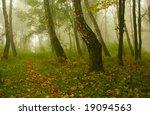autumn birch forest path during ... | Shutterstock . vector #19094563
