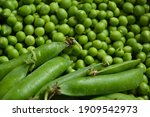 green pea background. pea pods... | Shutterstock . vector #1909542973