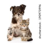 Stock photo dog and scottish kitten looking at camera isolated on white background 190973996
