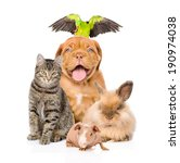 Stock photo group of pets together in front 190974038