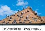 A Shot Of A Flock Of Pigeons...