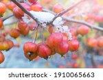 Winter Garden Scene With Red...