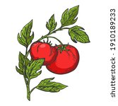 tomato plant branch color...   Shutterstock .eps vector #1910189233