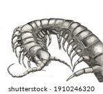 Hand Drawn Pencil Centipede ...