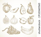 hand drawn fruits vector... | Shutterstock .eps vector #1910360560