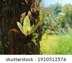 Little Fern Plant On The  Tree...