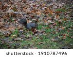 Squirrel In The Park Hides A...