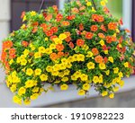 Wide View Of A Hanging Basket...