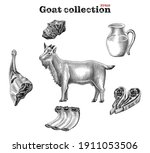 goat collection hand draw...   Shutterstock .eps vector #1911053506