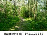 A Trail In The Spring Forest...
