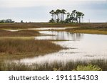 Marshy Pools Near Stands Of...