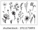 set of line drawings of herbs ... | Shutterstock .eps vector #1911173893