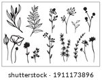 set of line drawings of herbs ... | Shutterstock .eps vector #1911173896