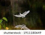 Heron Flying On Creek In...