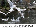 Plenty Of Seagulls On A River...