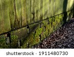 Mossy And Lichen Covered Wall...