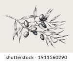 olive tree branch with olive... | Shutterstock .eps vector #1911560290