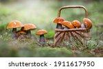 Basket Full Of Mushrooms In...