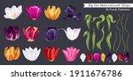 big set of multicolored tulips. ... | Shutterstock .eps vector #1911676786