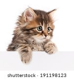 Stock photo pretty kitten peeking out of a blank sign isolated on white background 191198123