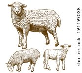 and,animal,animals,antique,art,background,cattle,cut,doe,domestic,drawing,engraved,engraving,etching,farm